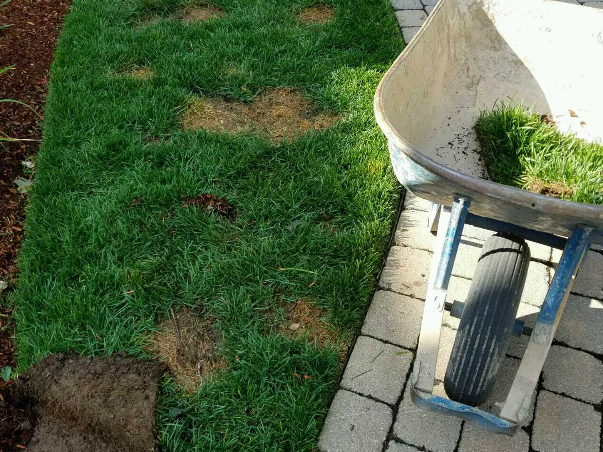wheel barrow next to lawn