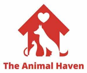 Animal Haven North Haven